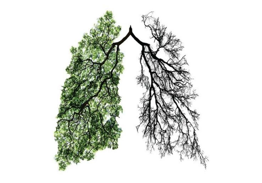 """当你多一个""""肺""""的时候,你猜会怎样?"""