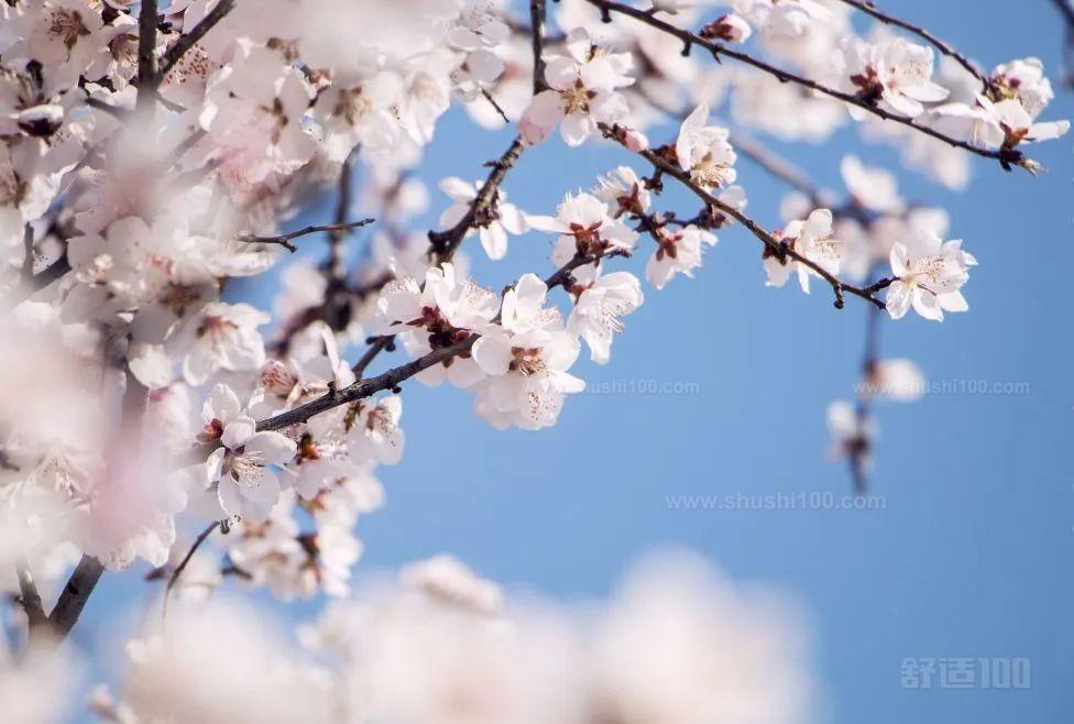 花粉、霉菌等空气污染物增加