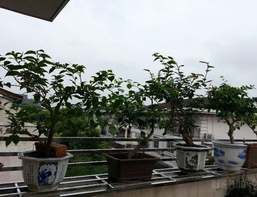不锈钢阳台花架—如何制作不锈钢阳台花架图片