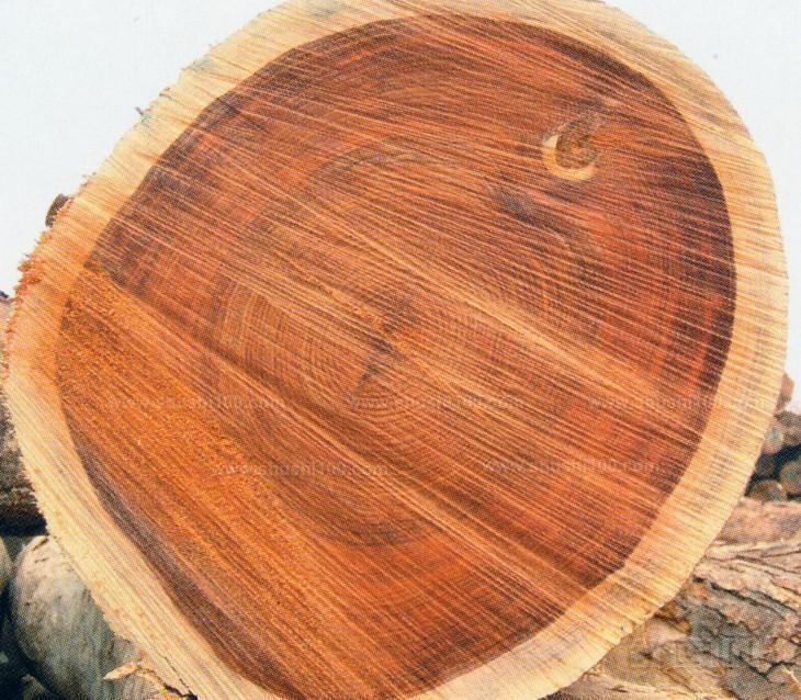 木材的养护技巧-第2张图片