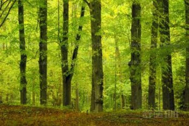 材质没有红木等名贵木材珍贵